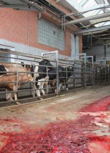 Animals entering the front door of a slaughterhouse will reach the exit about 19 minutes later in pieces.