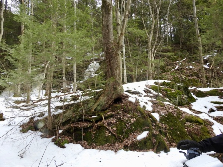 Vermont winter spring thaw tree trunk roots rock