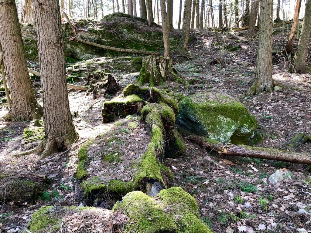 Vermont woods moss