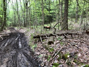 Vermont atv trail photography