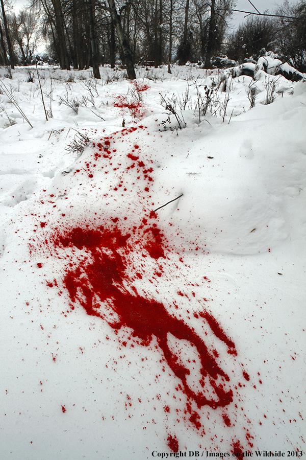 Ban hunting deer are sentient beings